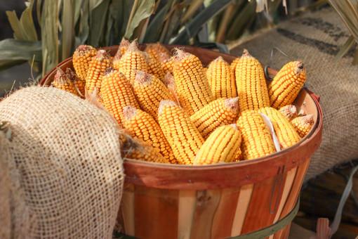 corn www.girlontherange.com