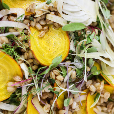 shaved golden beet, fennel and barley salad