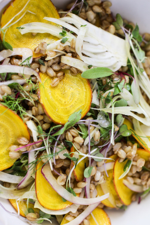 shaved fennel, beet, barley salad www.girlontherange.com
