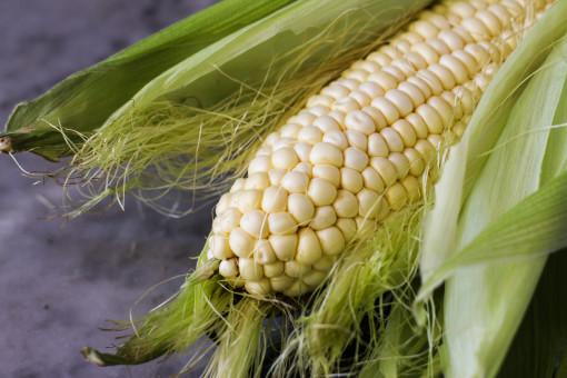corn cob www.girlontherange.com