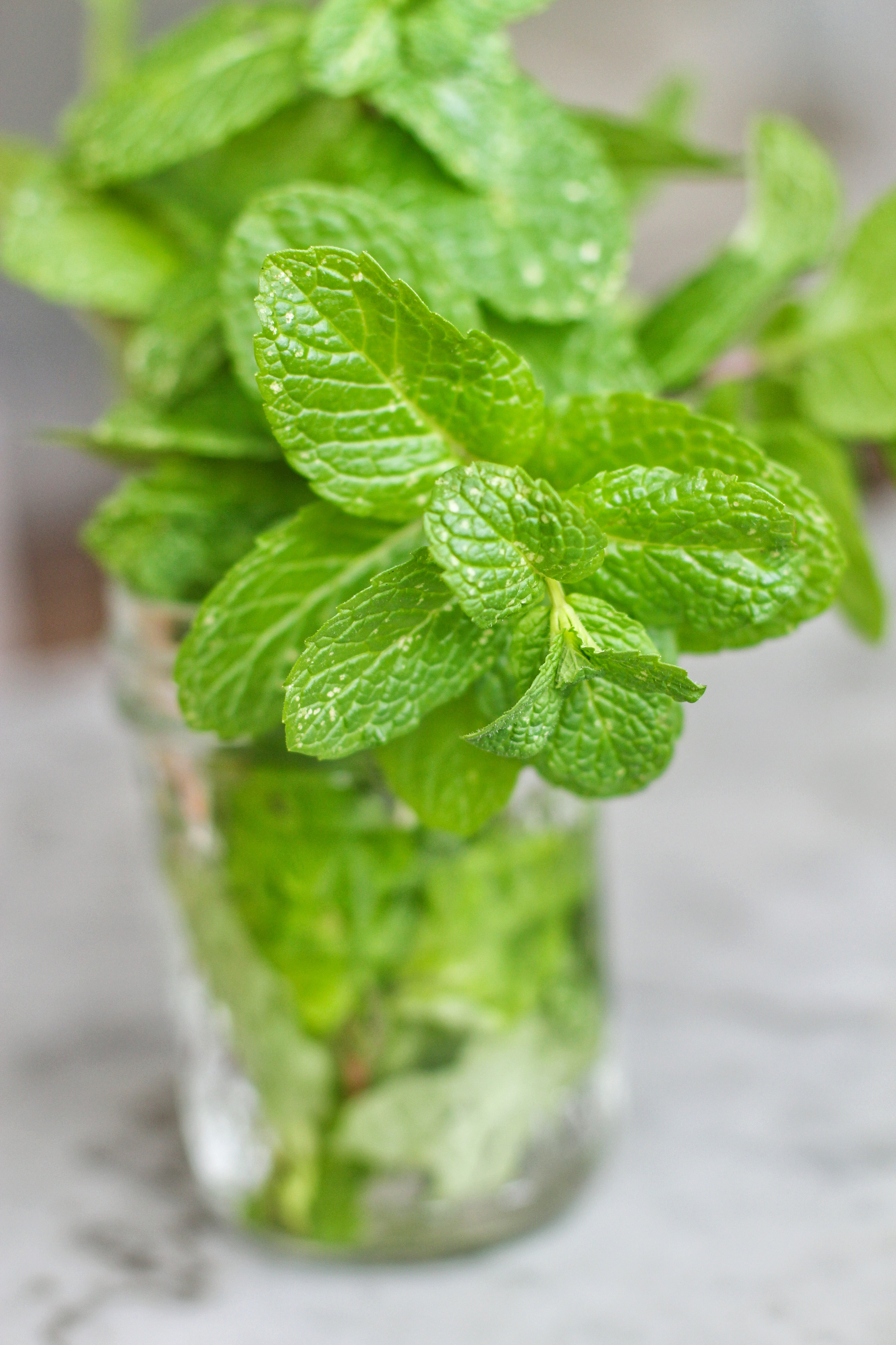 Apple Mint: The Fruity Mint - SPICEography